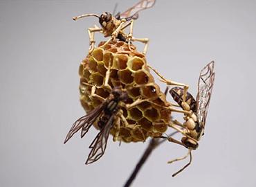 令人惊艳的手工艺术品-昆虫竹细工